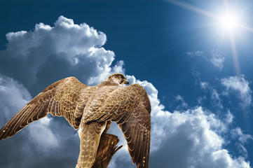 abstract hawk eagle above the sky