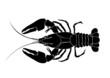 crawfish vector - 18559806