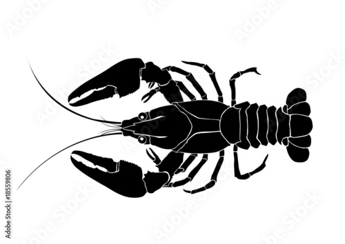 crawfish vector - 18559806