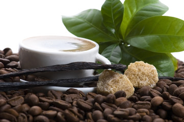 aroma coffee with vanilla and coffee branch