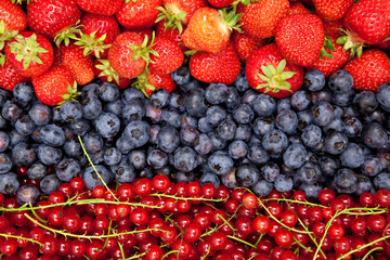 strawberries, huckleberries and red currants