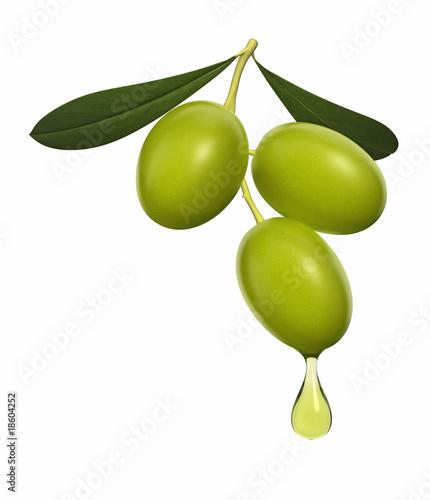 Olive branch - 18604252