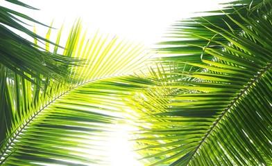 Palmen auf den Malediven