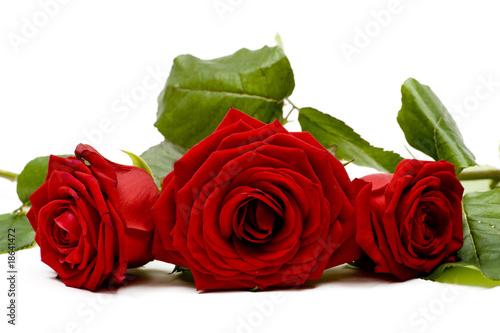 Leinwandbild Rose 16