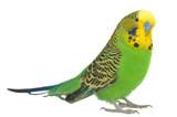 Fototapete Vögel - Federn - Vögel