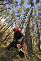 Waldarbeiter - Forstwirtschaft
