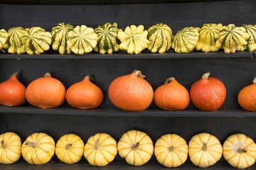 Three rows of pumpkins arranged by colour and shape