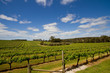 View of a vineyard - 18668604