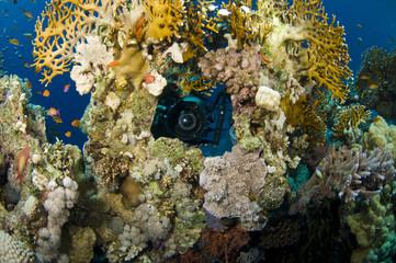 camera lens coral reef