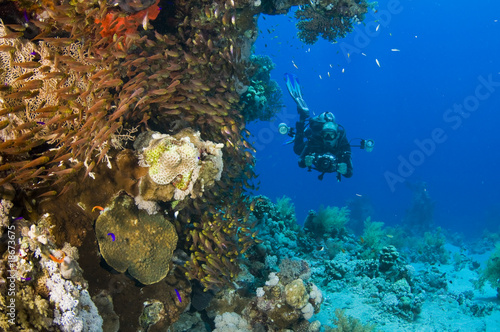 underwater reef with underwater photographer