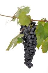 uva grappolo foglia vino vendemmia autunno