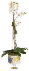 floral arrangement, orchid and cachepot