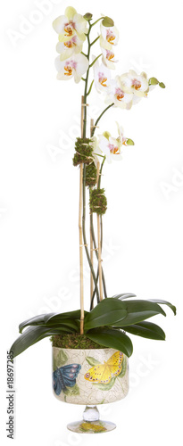 floral arrangement, orchid and cachepot