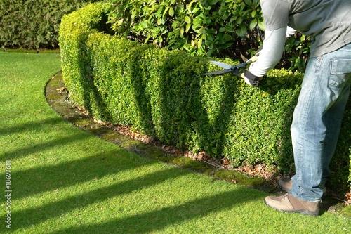 gardener - 18697681
