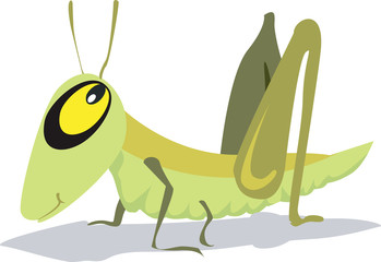 yellow eyed grasshopper wooing with eyes open