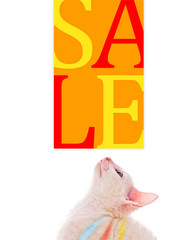 Cute Kitten Looking at Sale Sign
