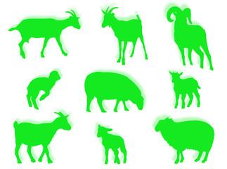 Pecore e agnelli in silhouette