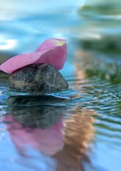 rose-leaf on water
