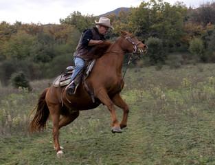 cavalier et son cheval en pleine nature