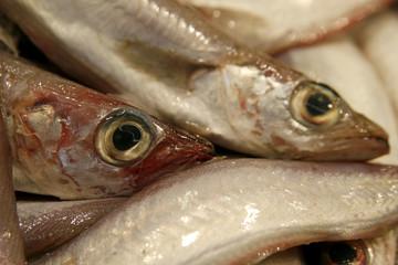Details of raw fresh fish
