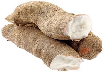 manioc, Manihot esculenta, racine tropicale fond blanc