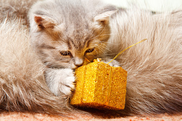 Baby cat with present