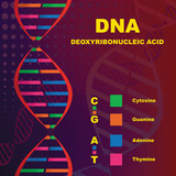 Structure of Deoxyribonucleic Acid (DNA) poster