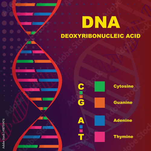 poster of Structure of Deoxyribonucleic Acid (DNA)