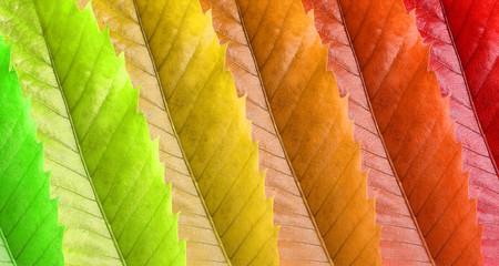 Um padrao colorido de folhas representando um ano