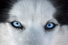 Those blue eyes in front ...