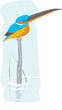 Illustration of a kingfisher sitting