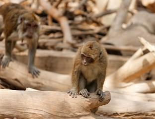 Monkey child sitting on fallen tree in zoo