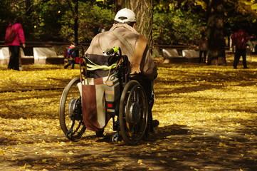 銀杏並木と車椅子