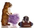 bulldog cheerleader standing beside puppy with football