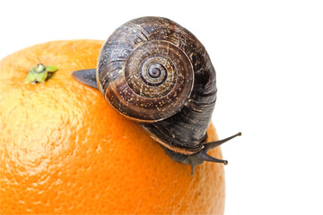 Caracol en una naranja