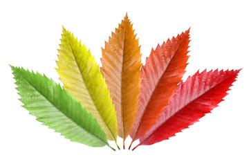 a colorfull pattern created by leafs
