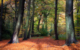 Fototapety Vibrant woodland scene in autumn