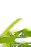 Fototapety Tautropfen auf Bambusblatt