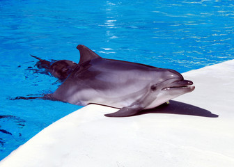 Dolphin is in the arena