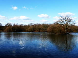Hainault Forest Water