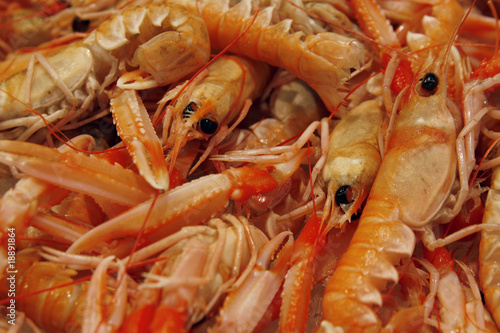 Raw fresh shrimps on the market