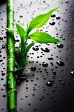 Bamboo-
