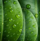 Fototapeta liść - środowisko - Roślinne