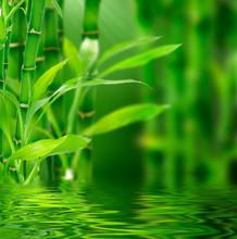čerstvé bamboo