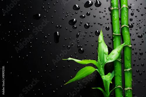 Bambus na czarno