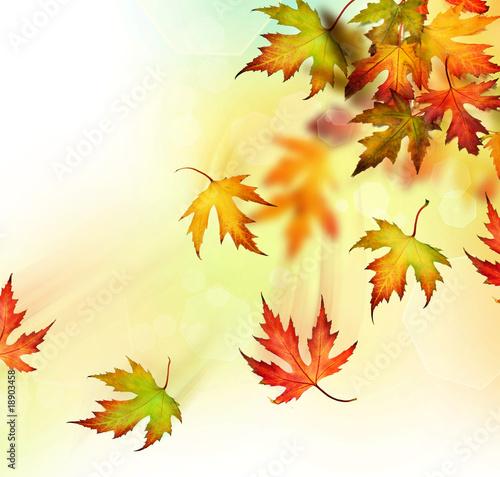 spadajace-liscie-jesienia-z-drzewa