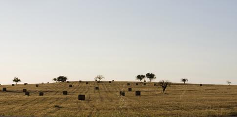 Haystack field
