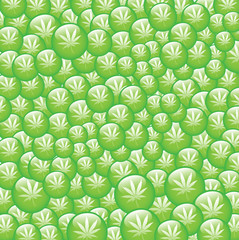 Green bubbles of marijuana