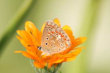 butterfly in orange
