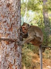 Small sad monkey sitting on the rope near the tree